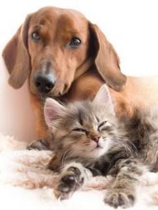 Кошки, собаки и люди: что между ними общего